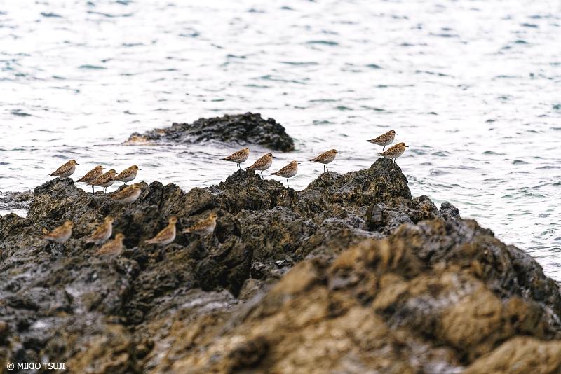 絶景探しの旅 - 絶景写真No.1343 離れ小島の岩礁でのんびりするダイゼン (浜島/沖縄県 八重山郡 竹富町)