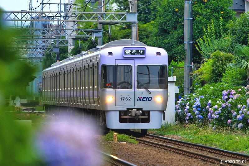 絶景探しの旅 - 絶景写真No.1359 あじさい色の電車 (京王井の頭線/東京都 杉並区)