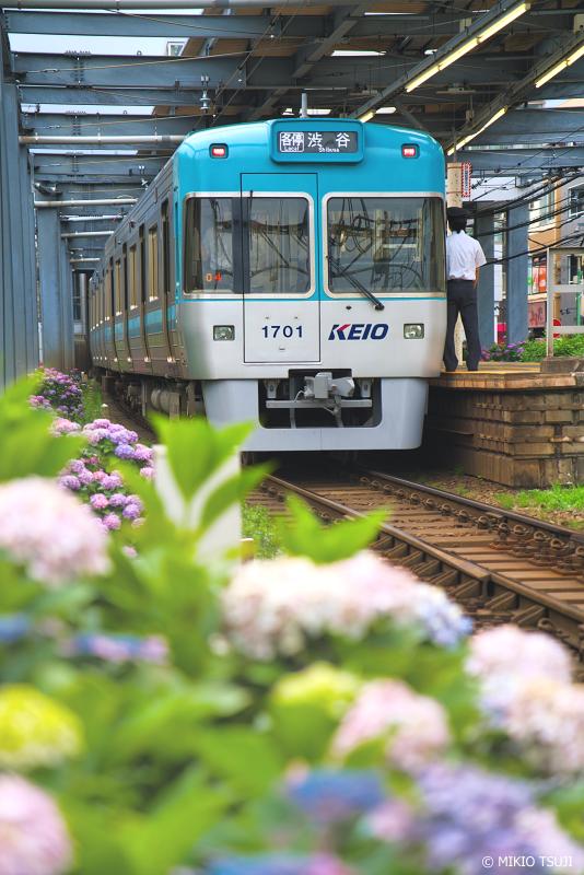 絶景探しの旅 - 絶景写真No.1361 あじさいの駅 (京王井の頭線/東京都 杉並区)