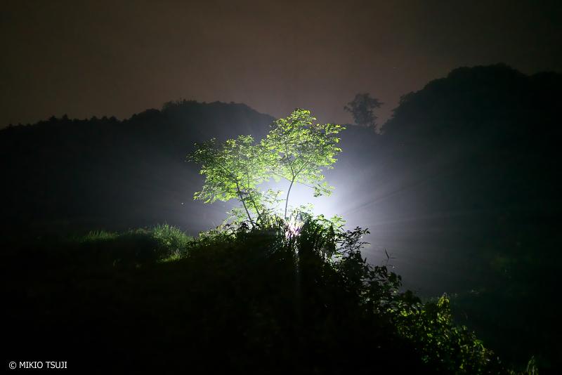 絶景探しの旅 - 絶景写真No.1365 輝く魔法の木 (東京都 あきる野市 横沢入里山保全地域)