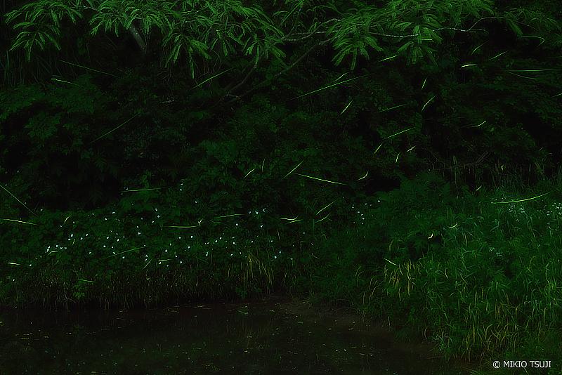 絶景探しの旅 - 絶景写真No.1364 ホタルの谷への通り道 (東京都 あきる野市 横沢入里山保全地域)