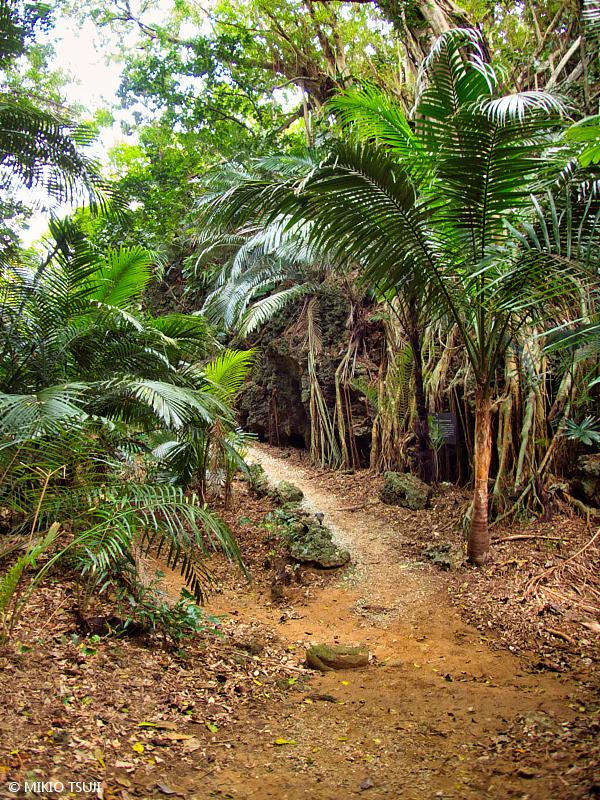 絶景探しの旅 - 絶景写真 No. 1384 海に続くジャングルの小道 (沖縄県 石垣島)