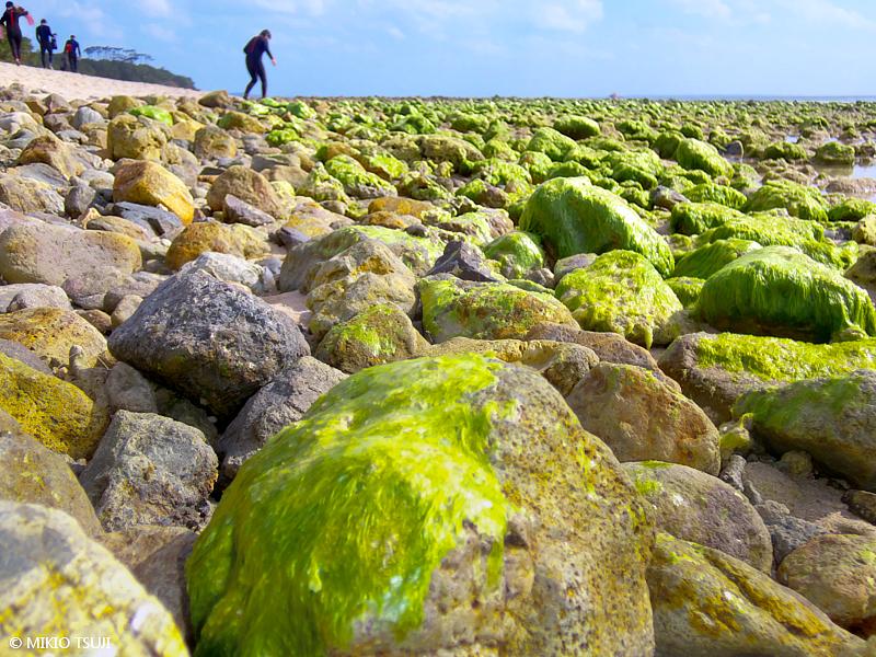 絶景探しの旅 - 絶景写真 No. 1386 アオサボールの続く海岸 (沖縄県 石垣島)
