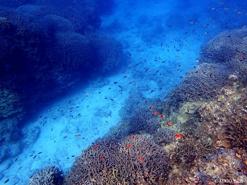 絶景探しの旅 - 絶景写真 No. 1389 南の海の熱帯魚ストリート (沖縄県 石垣島)
