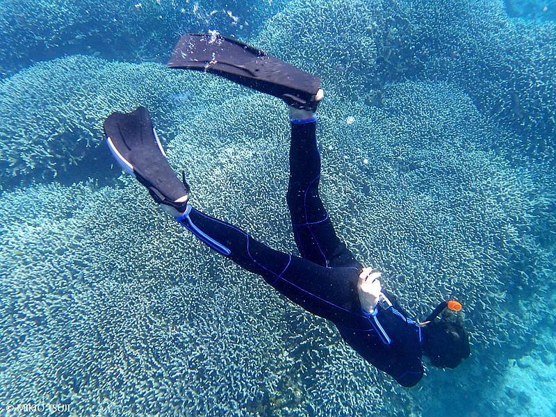 絶景探しの旅 - 絶景写真 No. 1390 サンゴの海を潜る (沖縄県 石垣島)