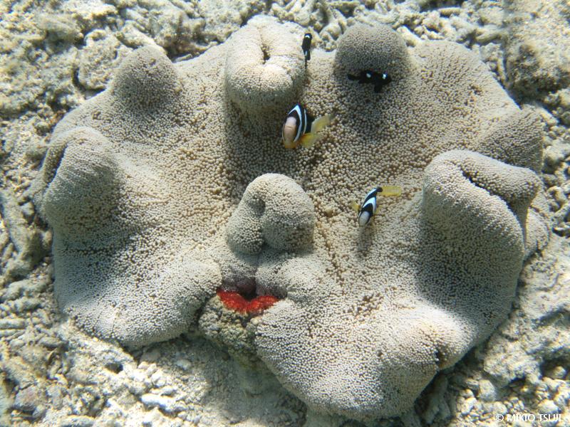 絶景探しの旅 - 絶景写真 No. 1393 サンゴの福笑い (沖縄県 石垣島)