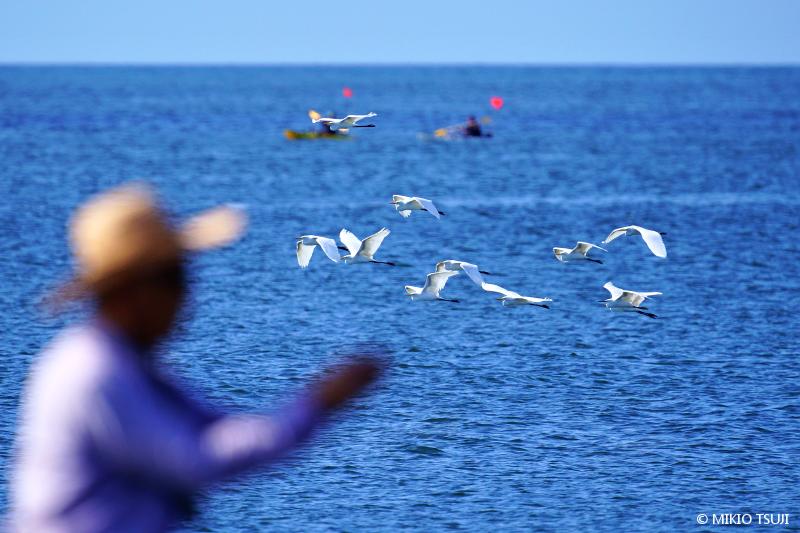 絶景探しの旅 - 絶景写真 No.1407 夏の海のアート (照ヶ崎海岸/神奈川県 大磯町)