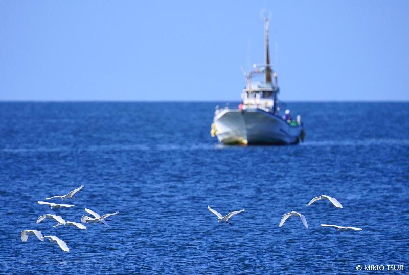 絶景探しの旅 - 絶景写真 No. 1406 海を渡るサギの群れ (照ヶ崎海岸 神奈川県 大磯町)