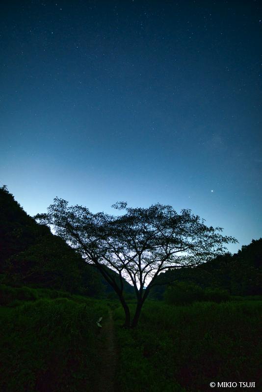 絶景探しの旅 - 絶景写真 No.1412 夜空の小道 (横沢入里山保全地域/東京都 あきる野市)
