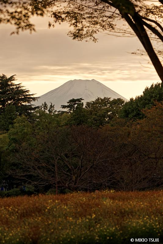 絶景探しの旅 - 絶景写真No.1479 秋の風景に浮かぶ雪景色の富士山 (昭和記念公園 東京都 立川市)2