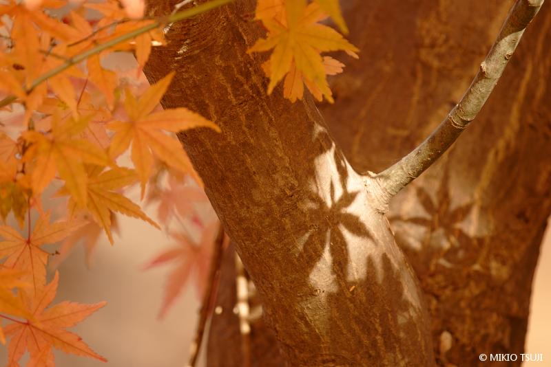 絶景探しの旅 - 絶景写真 No.1531 木漏れ日のシルエット (小宮公園/東京都 八王子市)